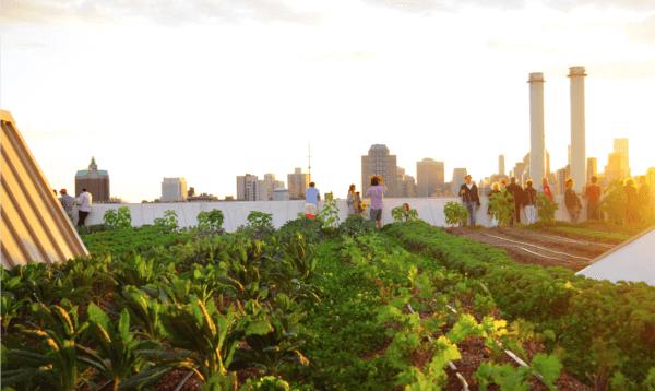 Naplemente a Brooklyn Grange zöld teteje felett. Fotó a Brooklyn Grange jóvoltából