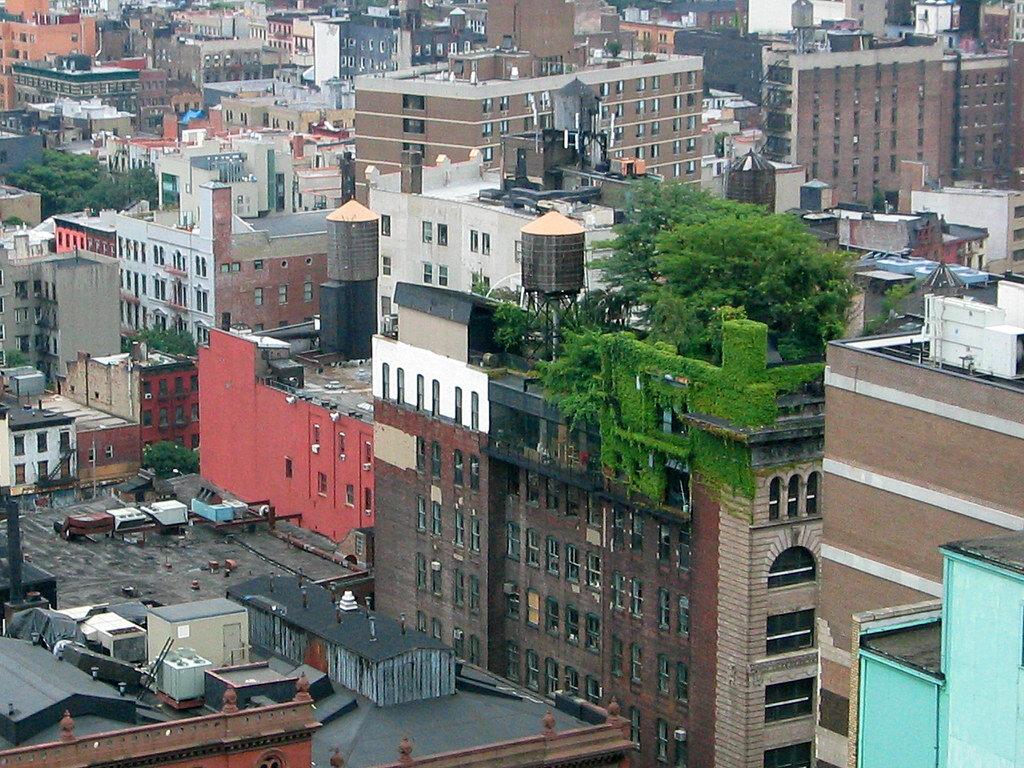 A Brooklyn Grange Navy Yard telephelye. Fotó a Brooklyn Grange jóvoltából.