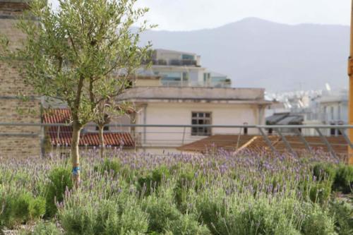 Evangelismo Kórház - Athén, Görögország